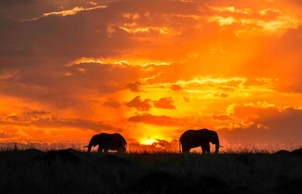 African Safari - Top Destinations and Holiday Packages 2016 / 2017