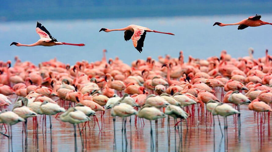 Lake Nakuru National Park flamingos