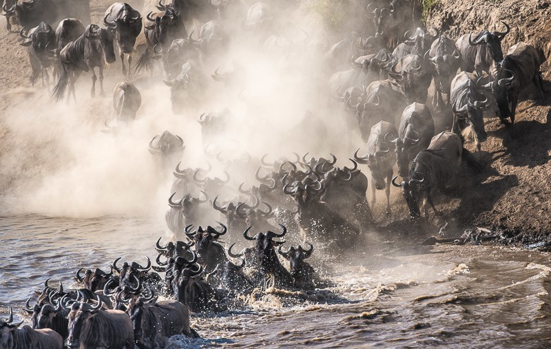 River crossing during the great migration