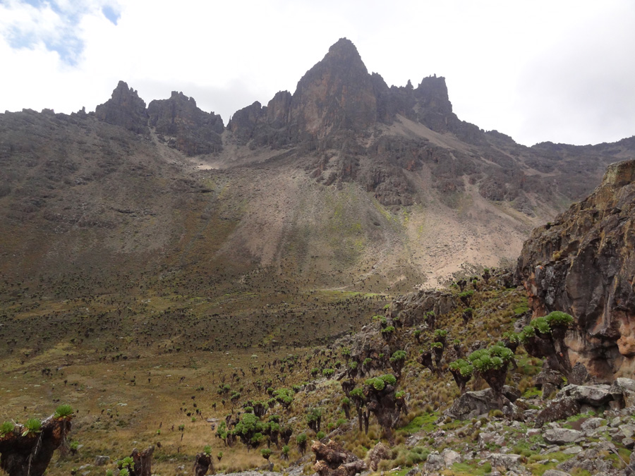 Valley, giant heather in Mount Kenya