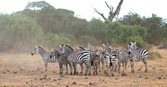 Kenya Tour Operator