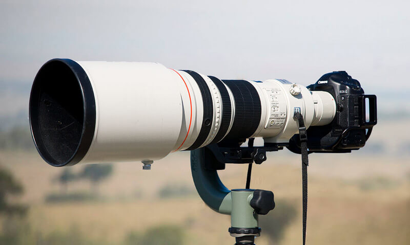 600mm Lens Kenya safari
