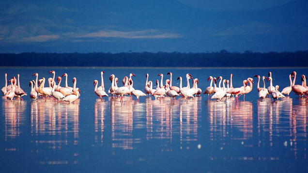 Flamingoes in Lake Nakuru, Kenya