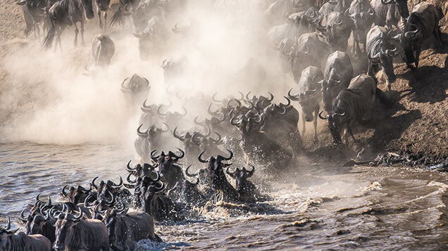 Great Migration, Tanzania and Kenya