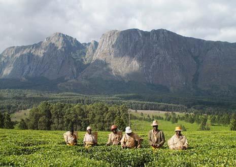 Mulanje Massif, Malawi